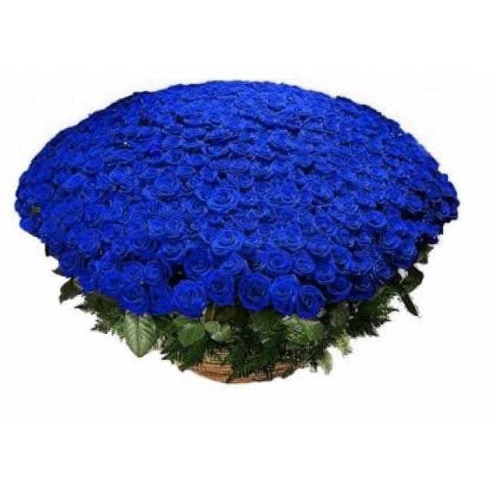 Большой букет синих роз, 301 шт. R924