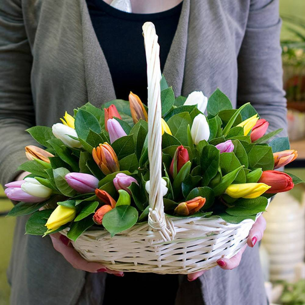 самых маленькие картинки с тюльпанами первый день снимали